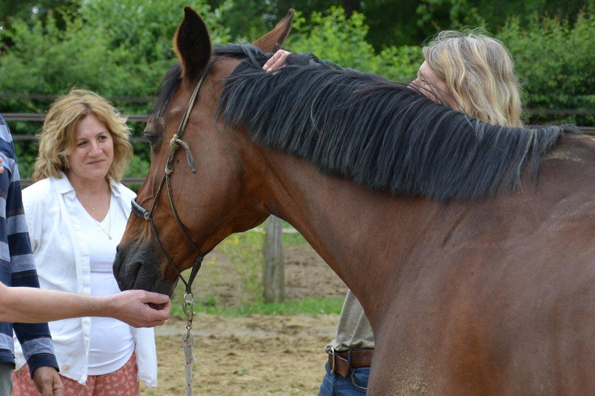 nlp trainerstraining en paarden